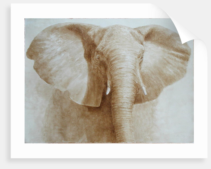 Elephant by Lincoln Seligman