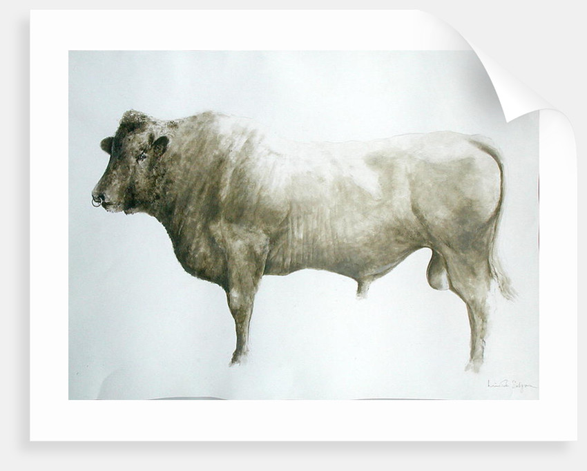Islay Bull by Lincoln Seligman