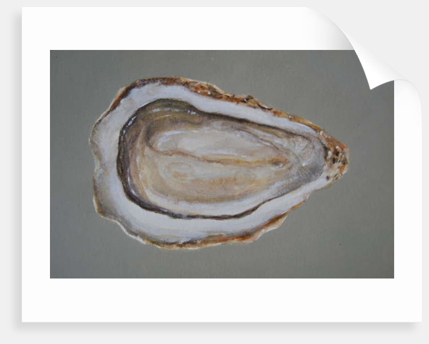 Breton Oyster 2 by Lincoln Seligman