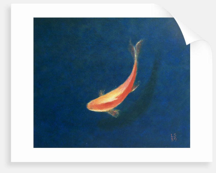 Goldfish by Lincoln Seligman