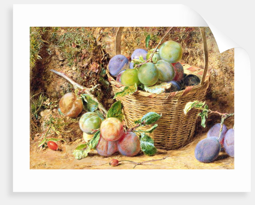 Plums by William Henry Hunt