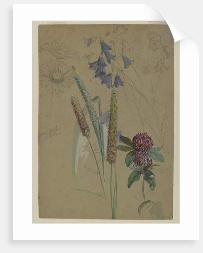 Flower study, 1860 by William Trost Richards