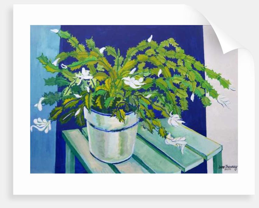 Christmas Cactus by Joan Thewsey