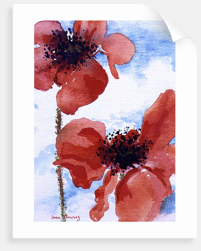Poppies by Joan Thewsey