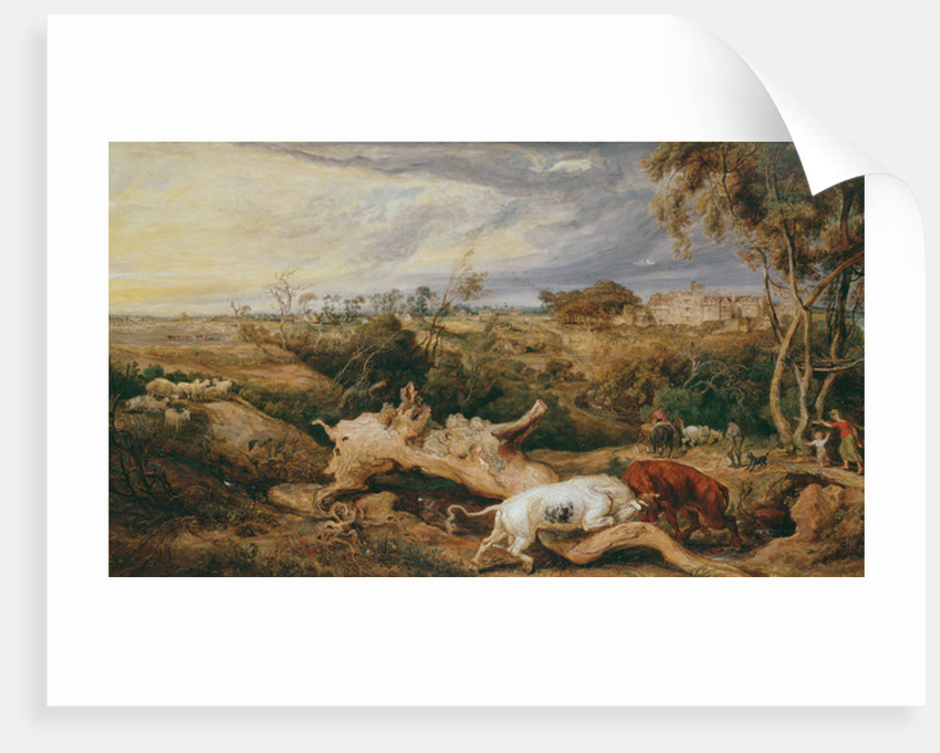 Bulls fighting; St. Donat's Castle in the distance by James Ward