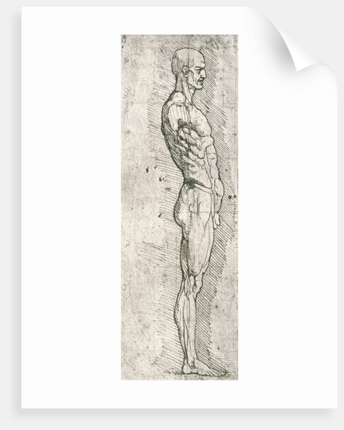 Anatomical Study Posters Prints By Leonardo Da Vinci