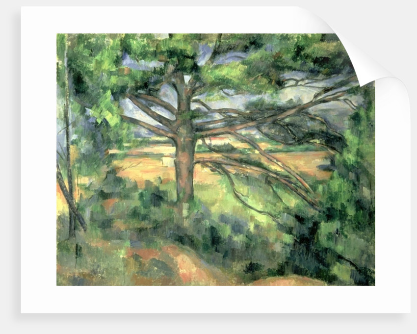 The Large Pine by Paul Cezanne