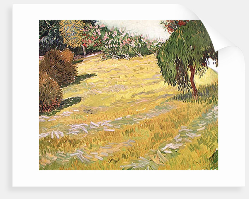 Field with Weeping Willow posters & prints by Vincent van Gogh
