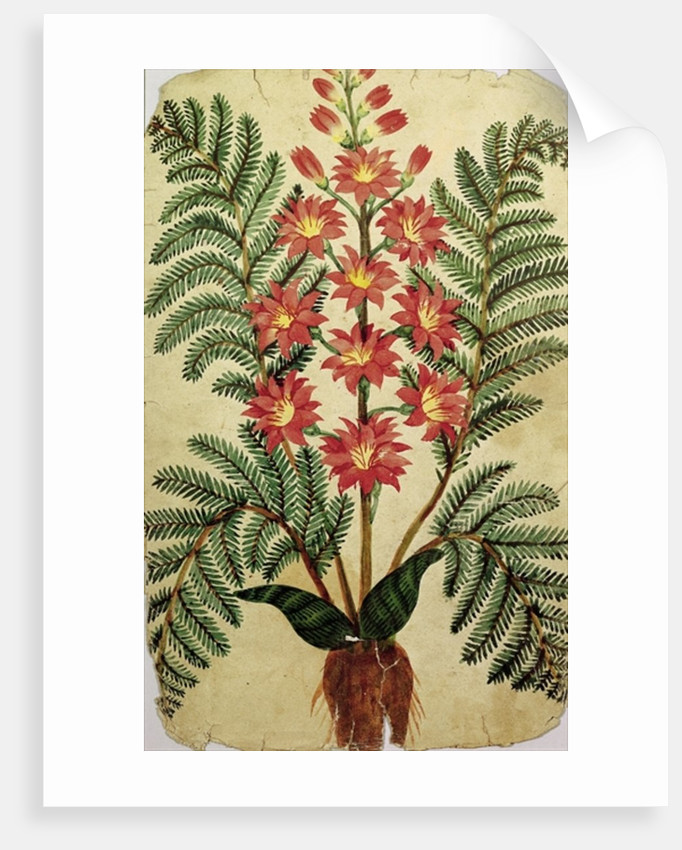 Fern with red and yellow flowers by French School