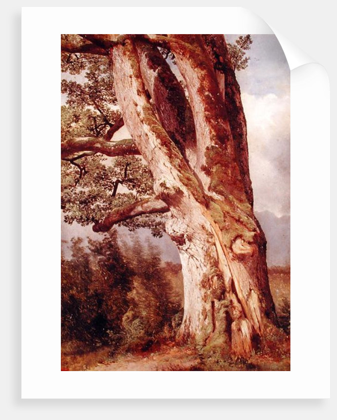 The Oak by Alexandre Calame