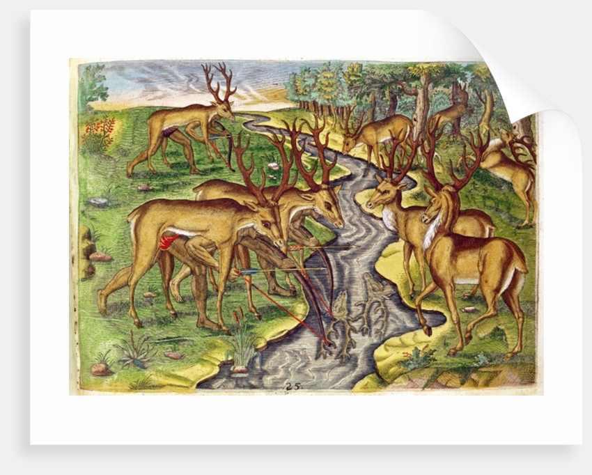 Stag Hunt by Jacques Le Moyne