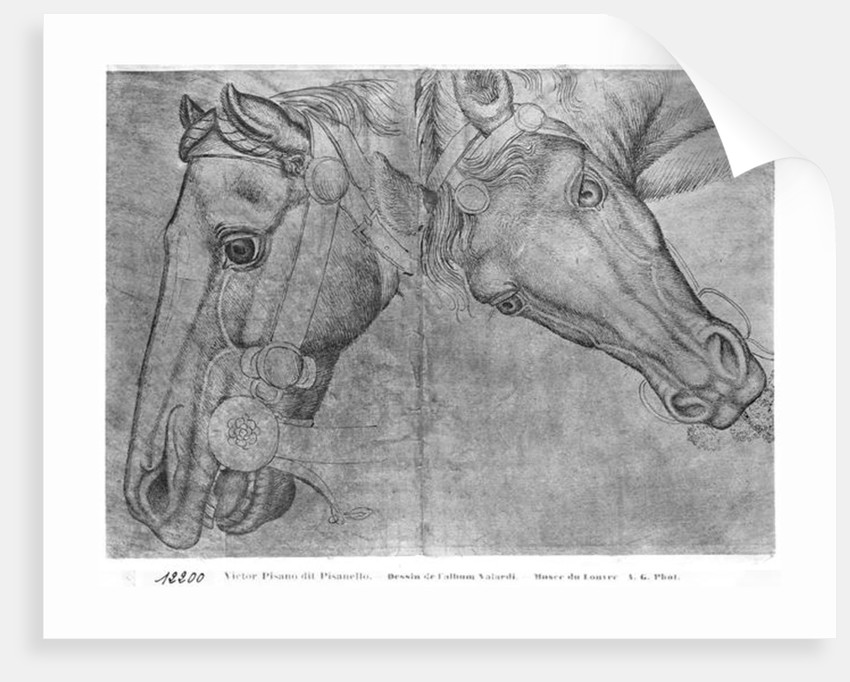Heads of horses by Antonio Pisanello