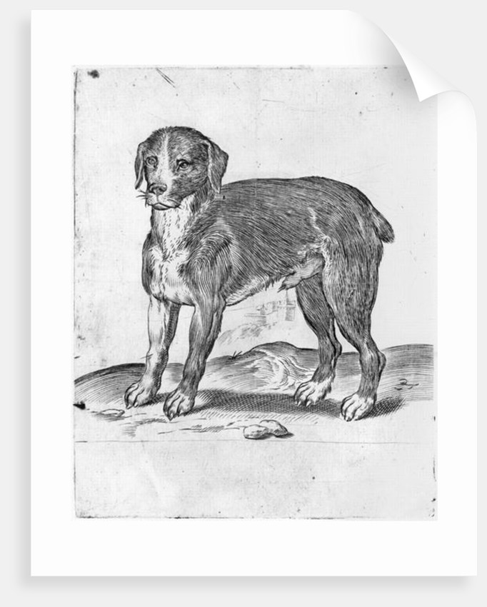 Dog by Agostino Carracci