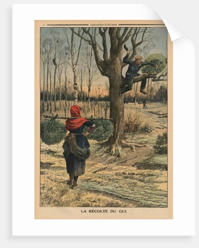Cutting the mistletoe by French School
