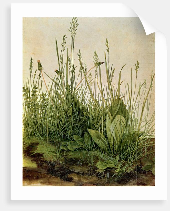 The Great Piece of Turf by Albrecht Dürer or Duerer