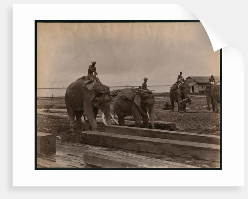 Working with elephants by Philip Adolphe Klier