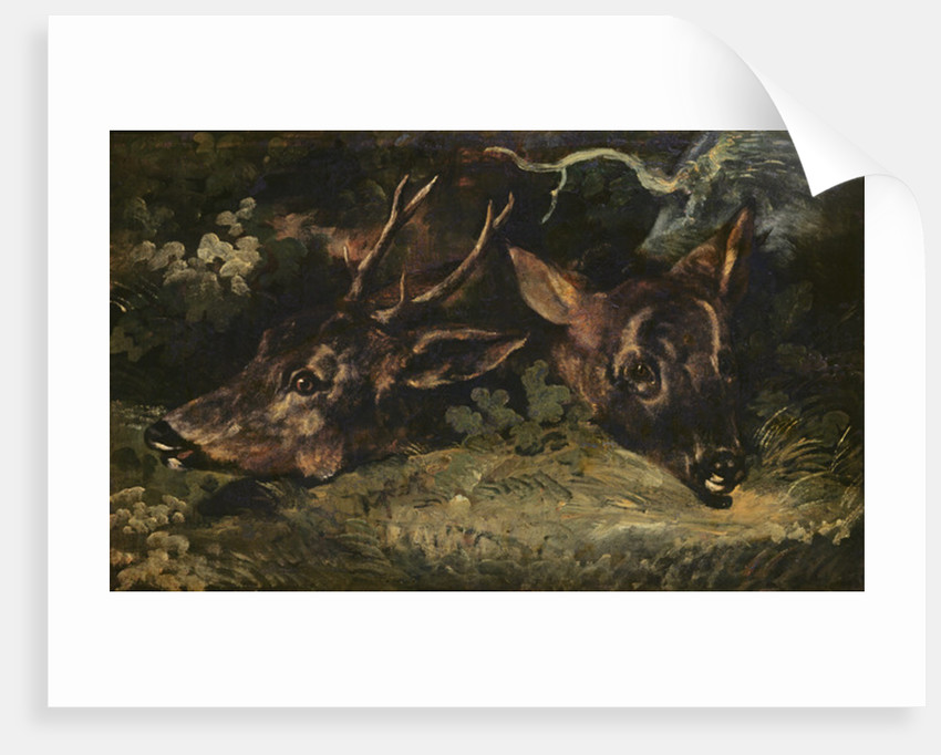 Heads of Roe Deer by Theodore Gericault