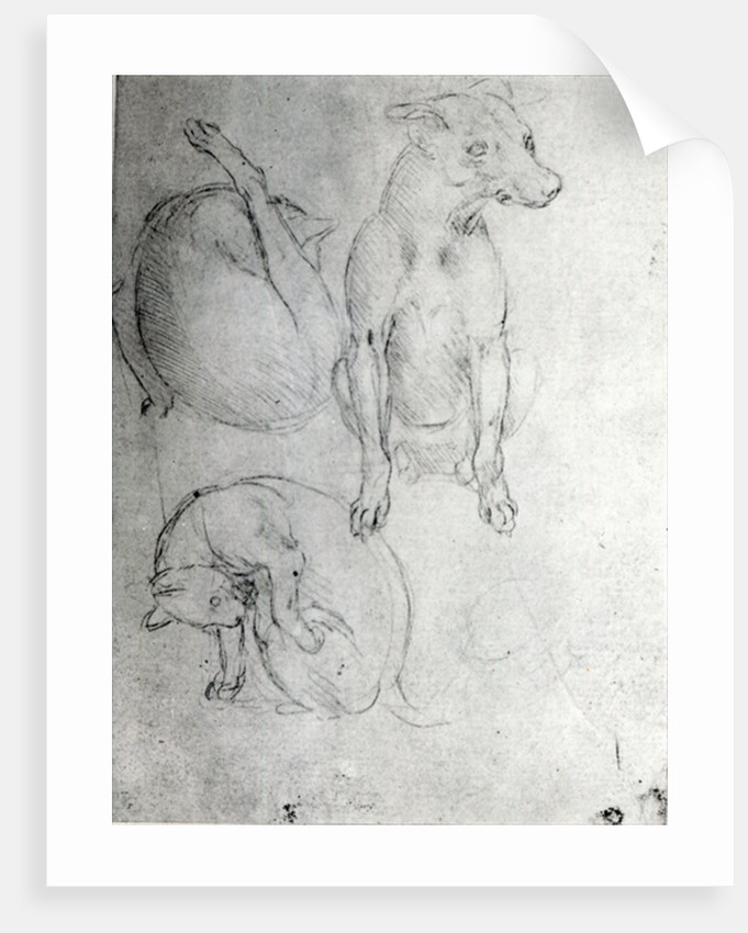 Study of a dog and a cat by Leonardo da Vinci