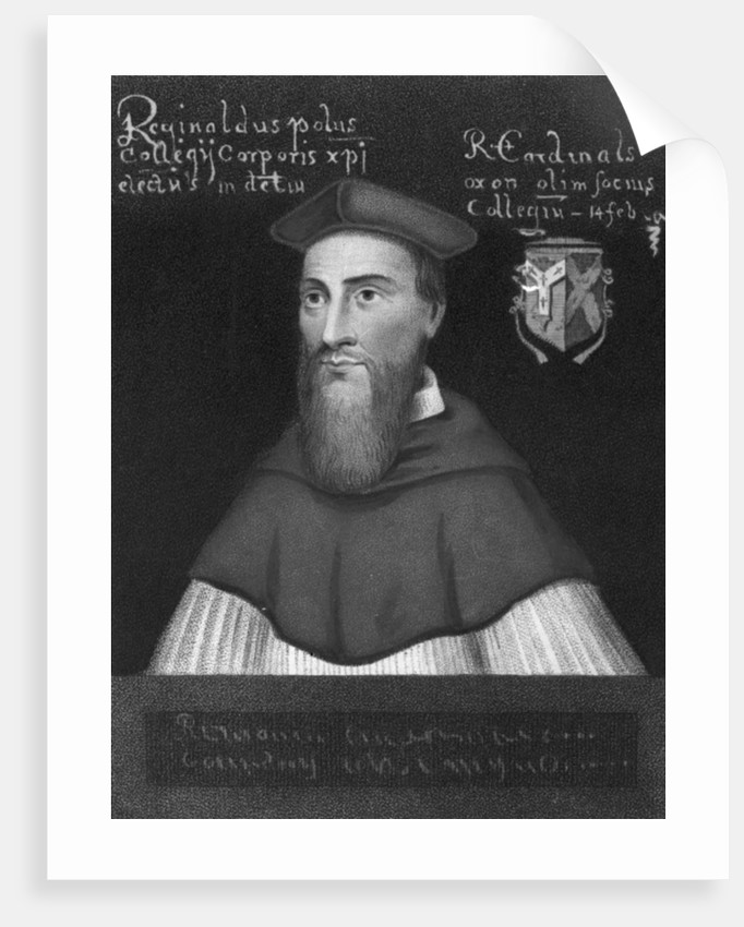 Reginald Cardinal Pole by English School