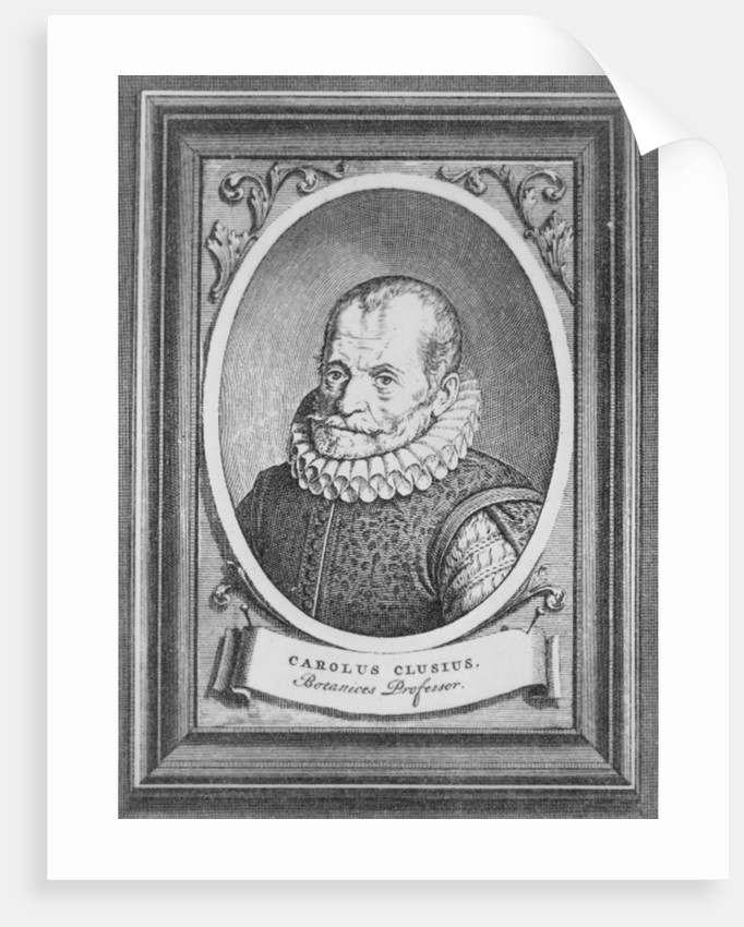 Carolus Clusius by Flemish School
