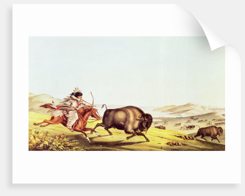 Hunting the Buffalo by American School