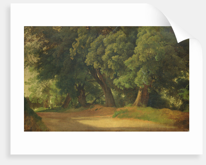 Oak Trees in Holstein by Louis Gurlitt