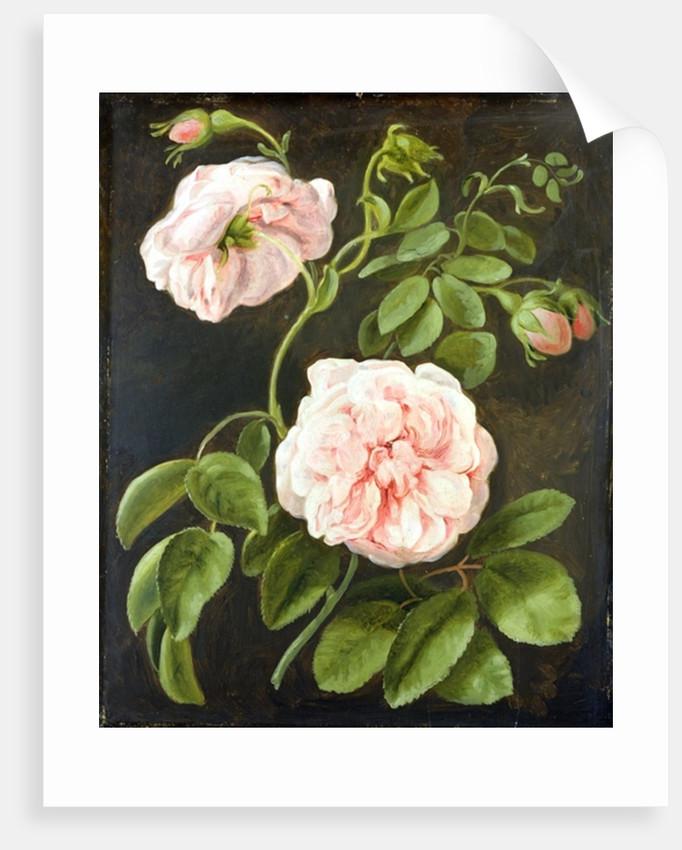 Flower Study by Johann Friedrich August Tischbein