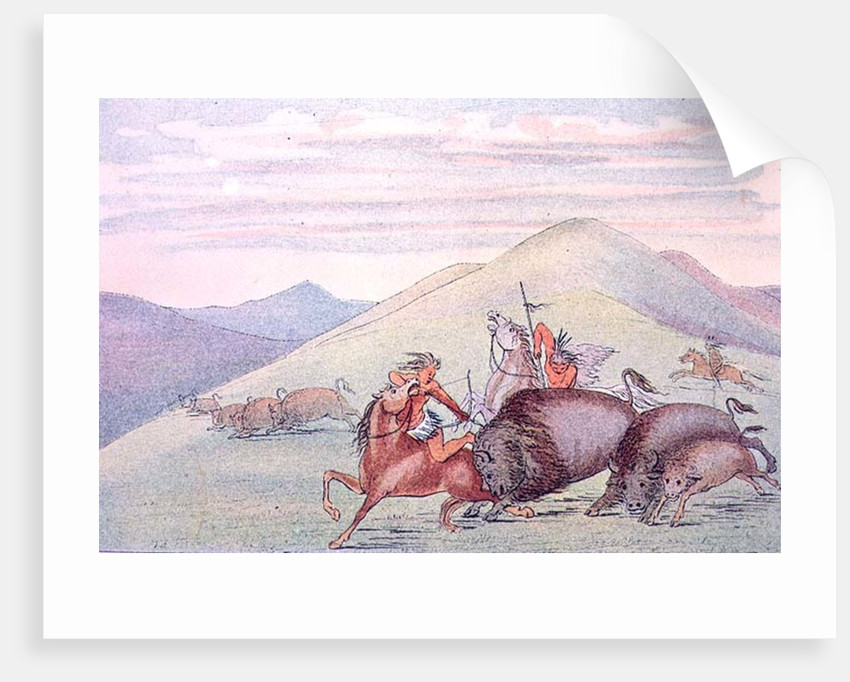 Buffalo bull protecting calf and mother under attack by George Catlin