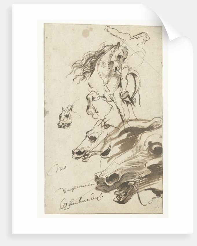 Study of Rider and head of a Horse by Sir Anthony van Dyck
