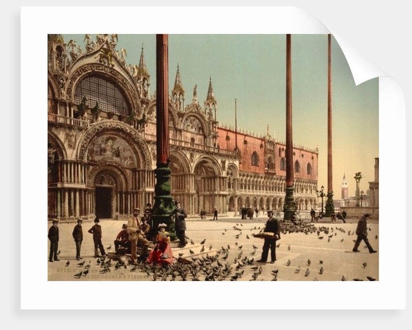 Pigeons in St. Mark's Place, Venice, Italy by Anonymous