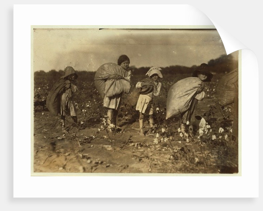 Edith 5 and Hughie 6 pick cotton all day, Alton 7 picks 50 pounds and Ruth 9 picks 75 by Lewis Wickes Hine