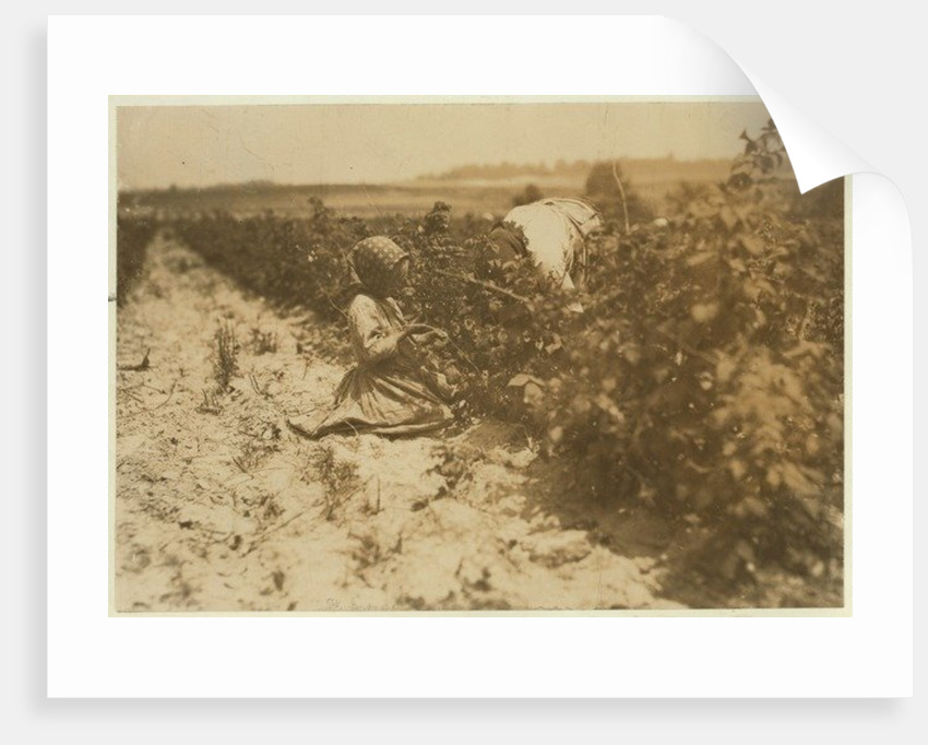 A six year old Polish girl picking berries all day with her family by Lewis Wickes Hine