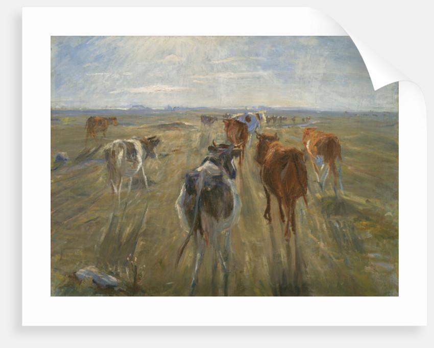 Long Shadows. Cattle on the Island of Saltholm by Theodor Esbern Philipsen
