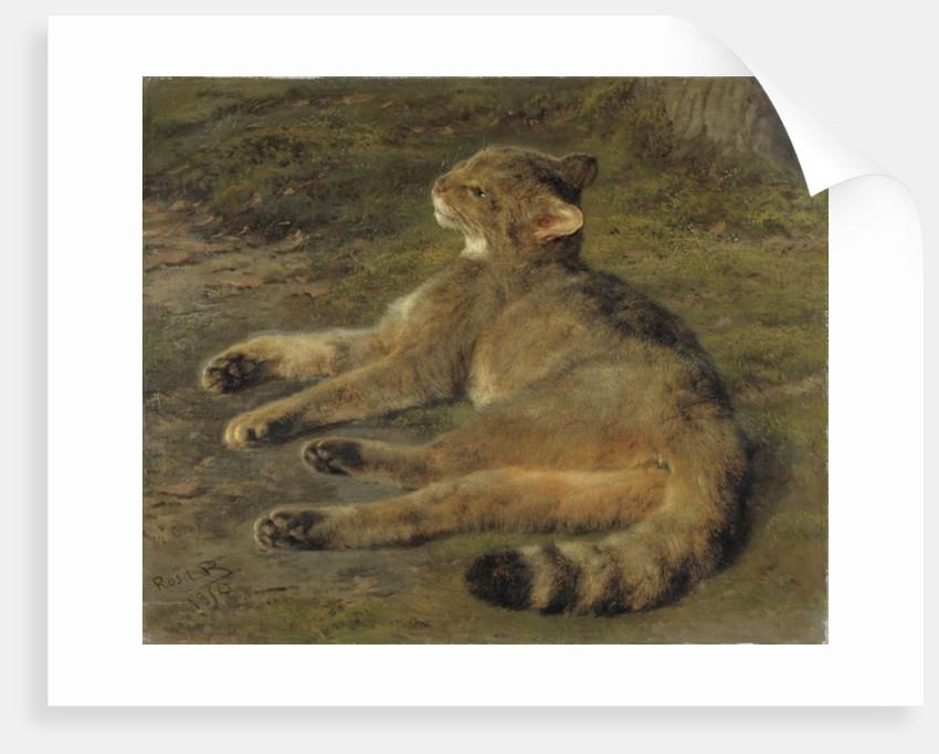 Wild Cat by Rosa Bonheur