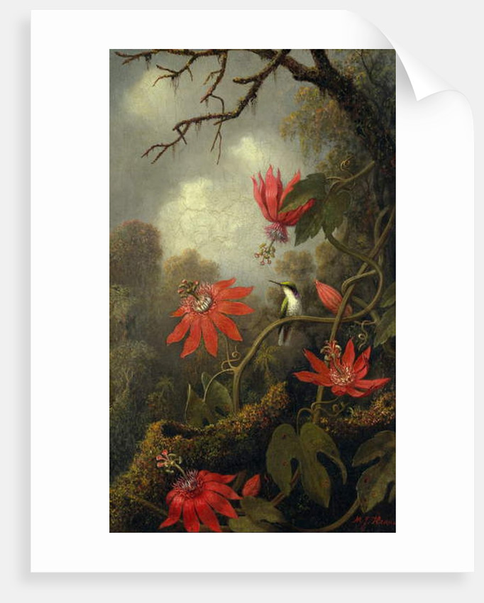 Hummingbird and Passionflowers, c.1875–85 by Martin Johnson Heade