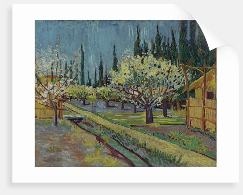 Orchard Bordered by Cypresses, 1888 by Vincent van Gogh