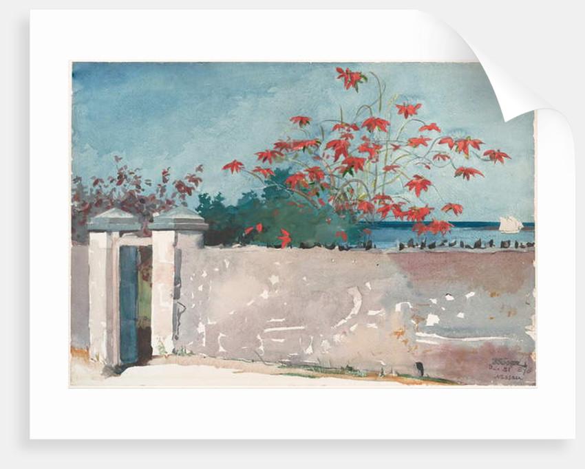 A Wall, Nassau, 1898 by Winslow Homer