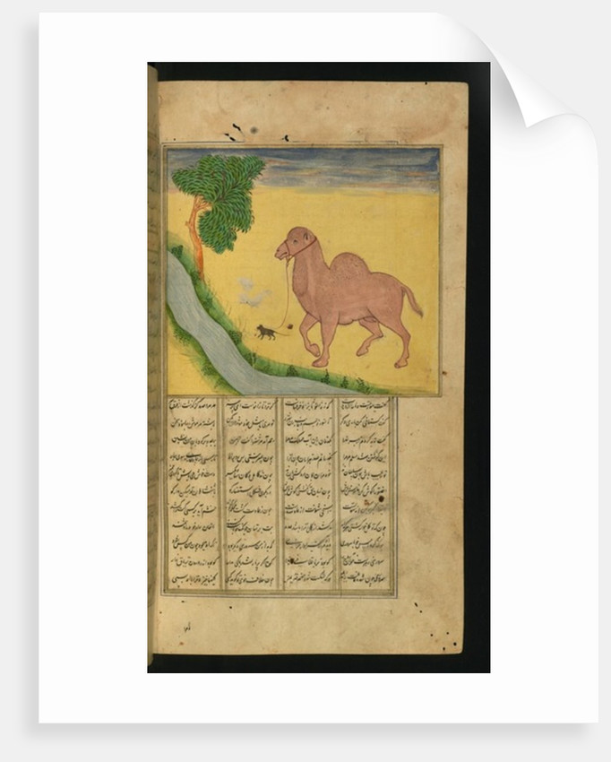 A Mouse, Clutching the Reins of a Camel, at a Stream of Water by from 'A Collection of Poems'