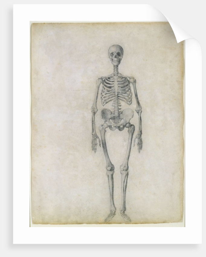 The Human Skeleton Anterior View Posters Prints By George Stubbs