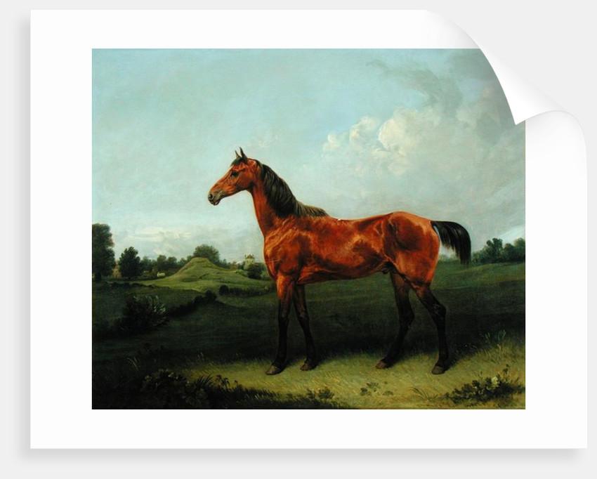 A Bay Horse in a Field by Edmund Bristow