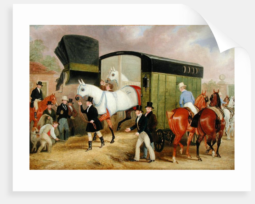 The Derby Pets: The Arrival by James Pollard