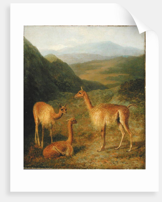Vicunas by Jacques-Laurent Agasse