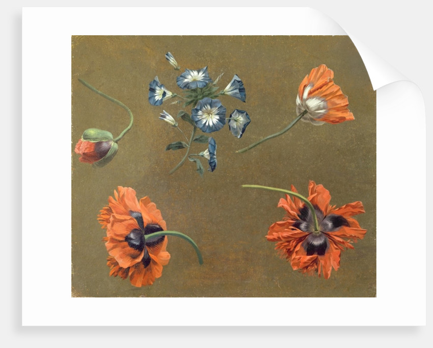 Poppies and Tradascanthus by Swiss School