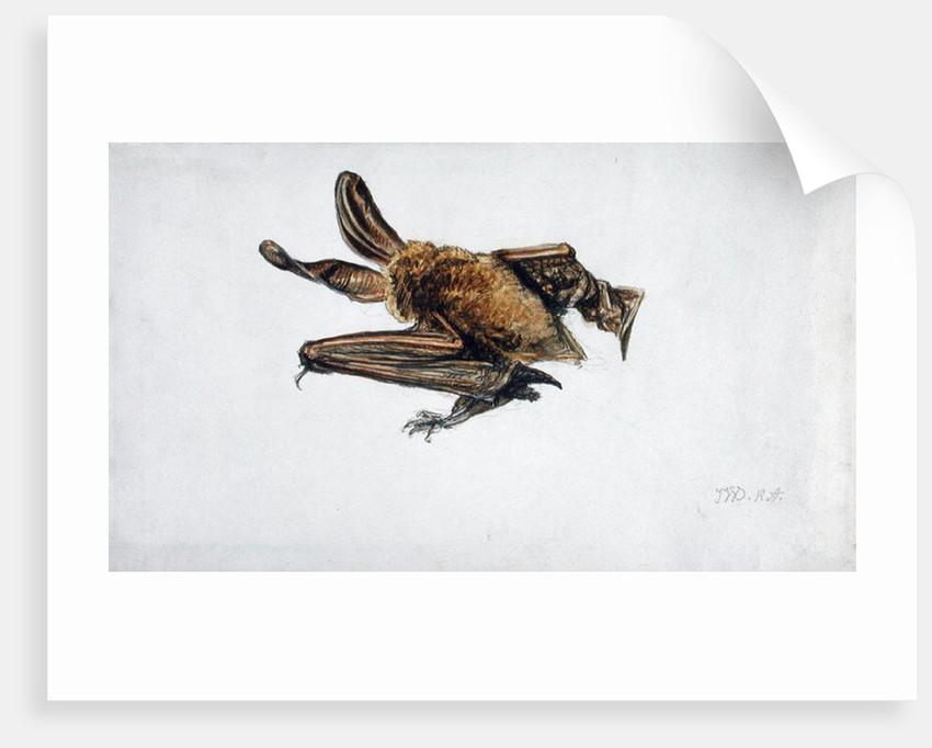 A Bat by James Ward