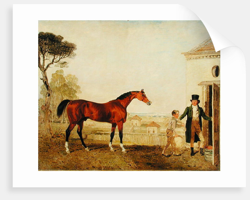 'Sultan' at the Marquess of Exeter's Stud, Burghley by Lambert Marshall