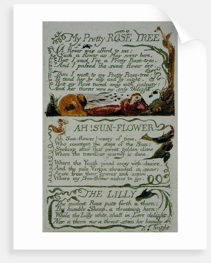 My Pretty Rose Tree and Ah! Sun-flower and The Lily by William Blake