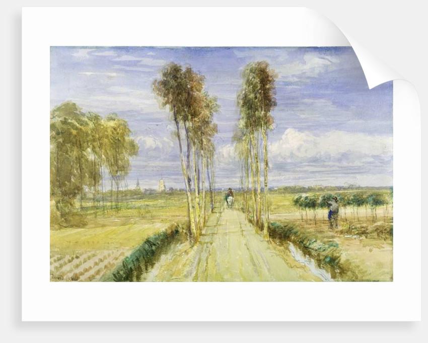 The Poplar Avenue by David Cox