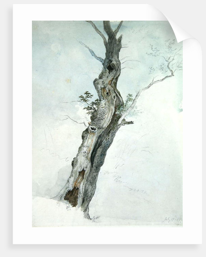 Tree Study by Robert Hills