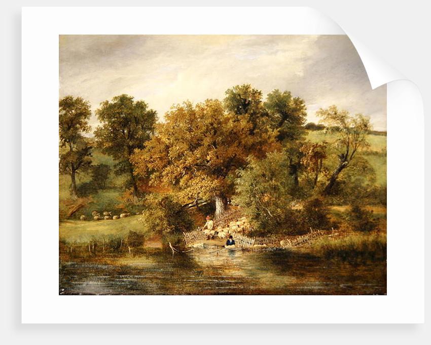 Sheep Washing at Postwick Grove, Norwich by James Stark