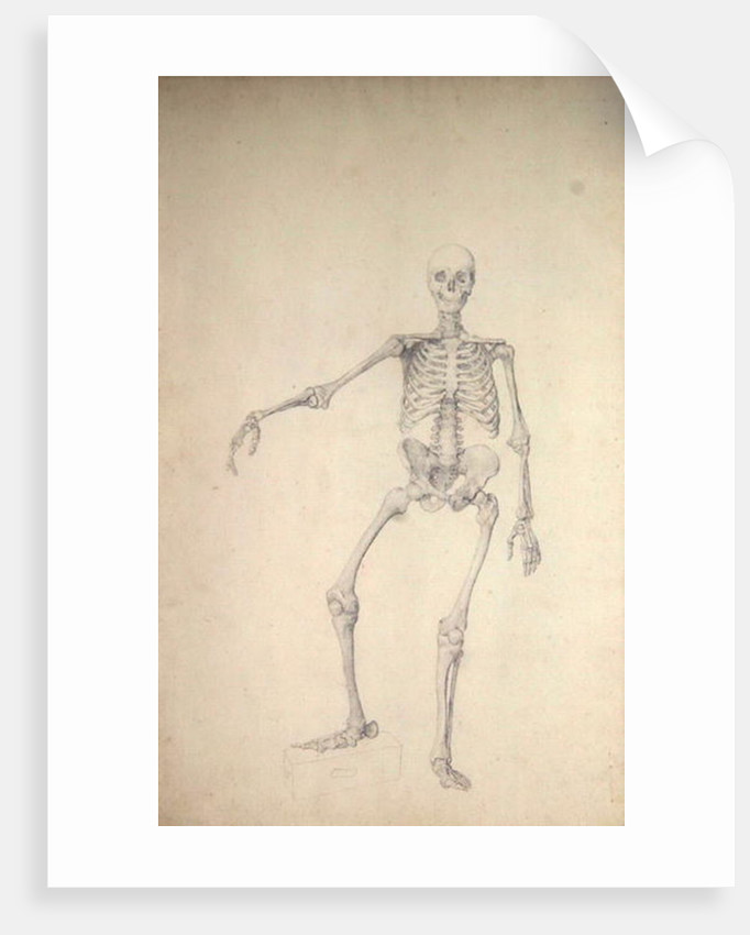Human Skeleton, Anterior View, Right Arm Outstretched posters ...